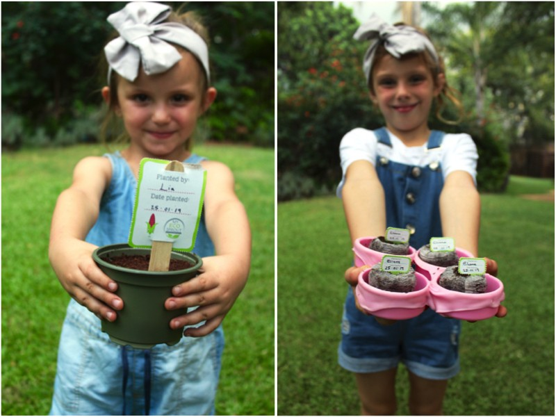 Growing your own vegetables, Growing your own vegetables with My Eco Sprout.
