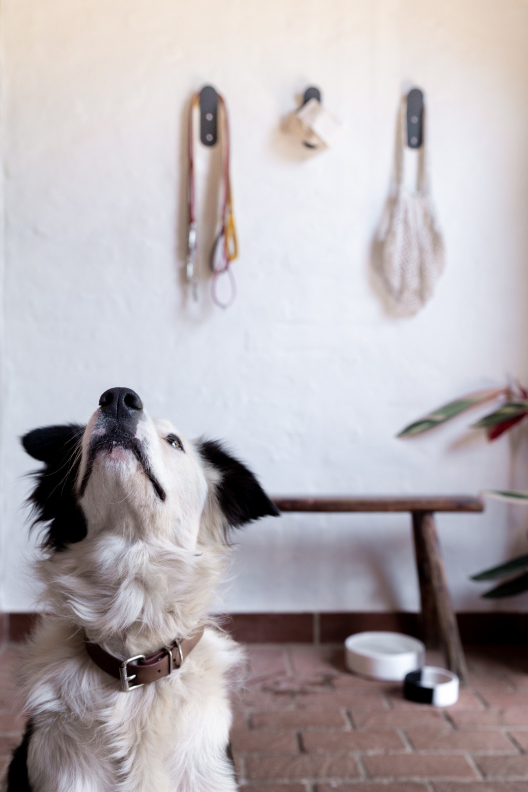 Dog Collars Made In South Africa Benji And Moon