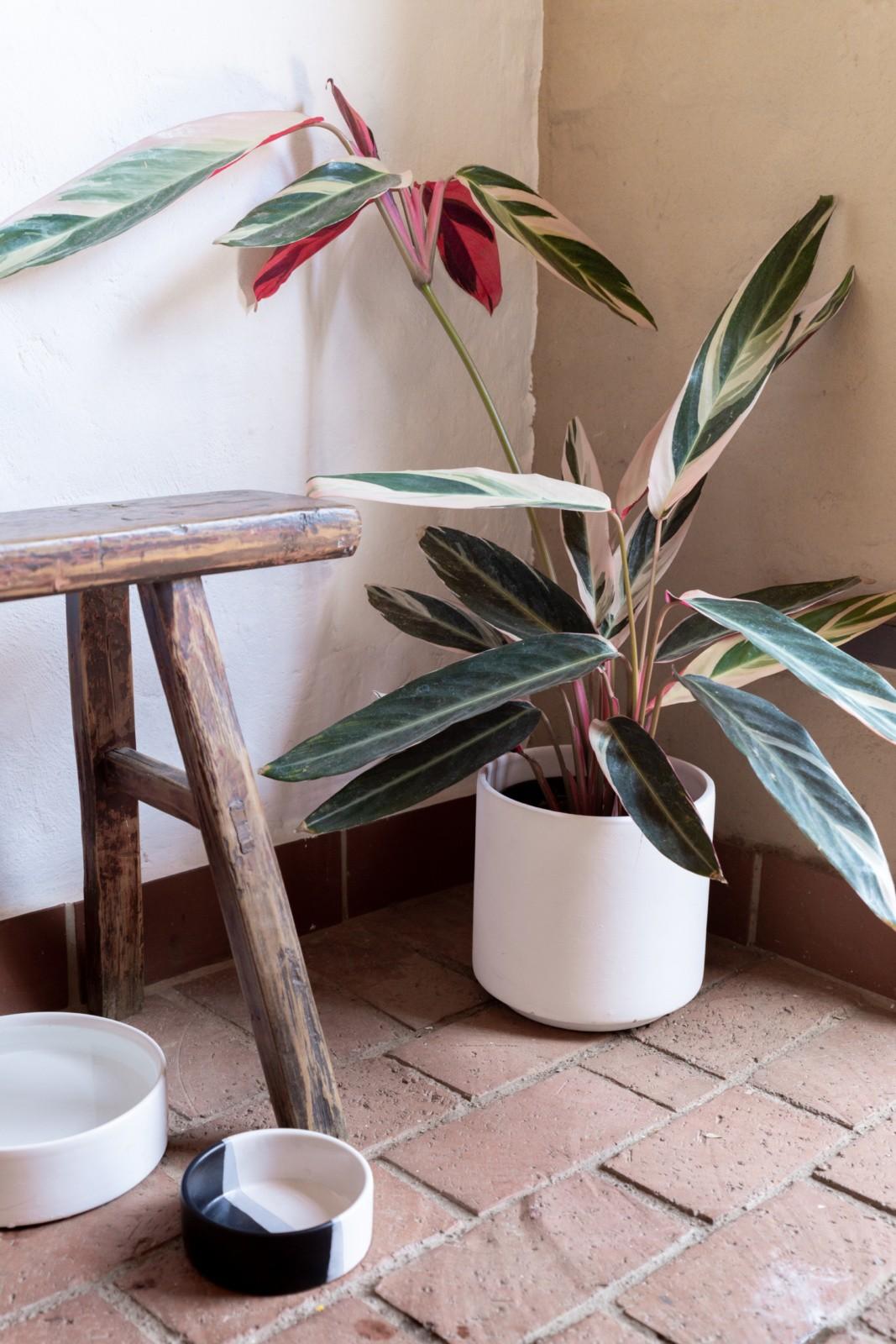 Handmade Ceramic Bowls South Africa Just A Mamma Blog